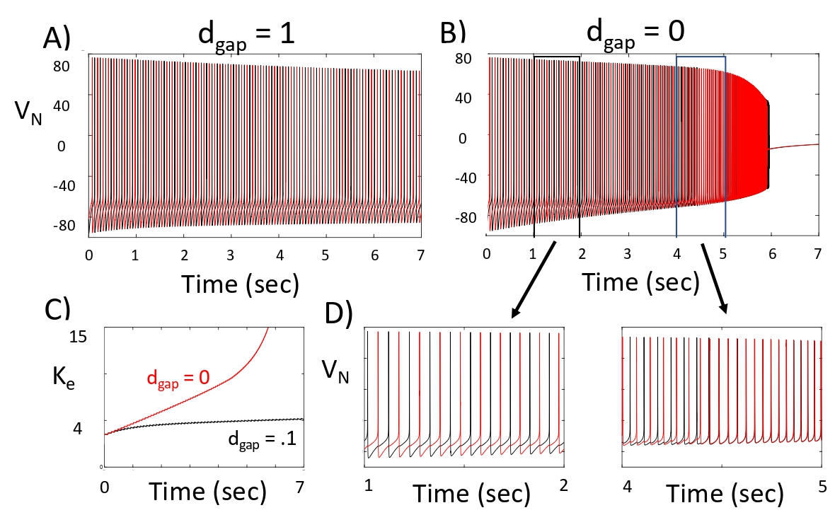 Figure 3:  Solutions of Network II. A) With gap junctions, the two neurons exhibit anti-phase oscillations. B) Without gap junction coupling, the network switches from anti-phase to synchronous spiking at around 4.5 seconds. C) With gap junctions, the model maintains a nearly constant Ke level, but not without gap junctions. D) Blow up of solution shown in B).