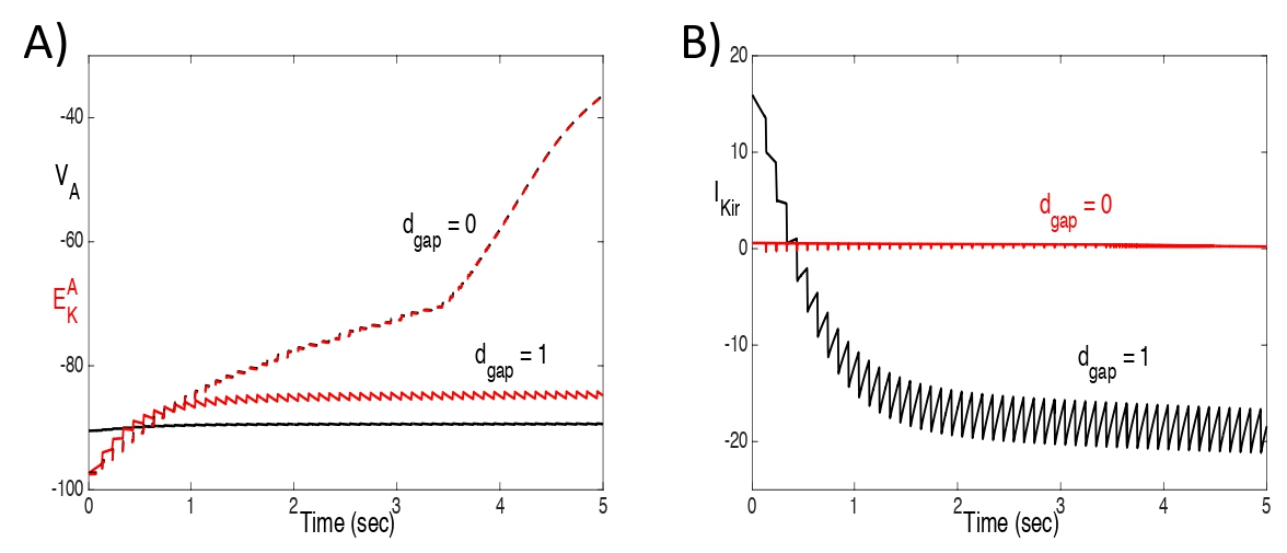 Figure 5:  Plots of A) VA and E_K^A, and B) IKir, with and without gap junctions, for the same solutions shown in Fig. 4 with an input rate of 10 hz. With gap junctions, VA falls below E_K^A and IKir reverses (IKir < 0). Without gap junctions, VA tracks very closely with E_K^A and IKir remains negligible.